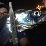 タチウオ:スローダート釣法