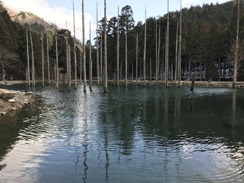 大型トラウトが潜む朽木渓流魚センターの第2ポンド