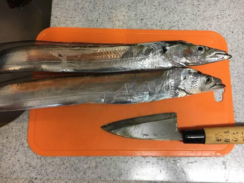 舞洲のタチウオ釣果