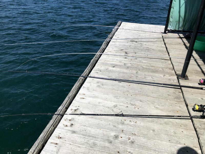 堂ノ浦の筏でカレイ