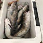 初のタラ釣りは大漁!