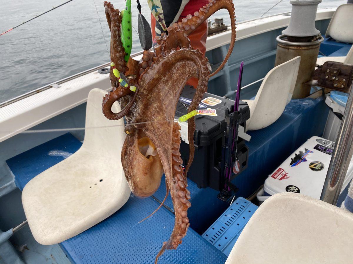 色んなタコエギで蛸を狙おう