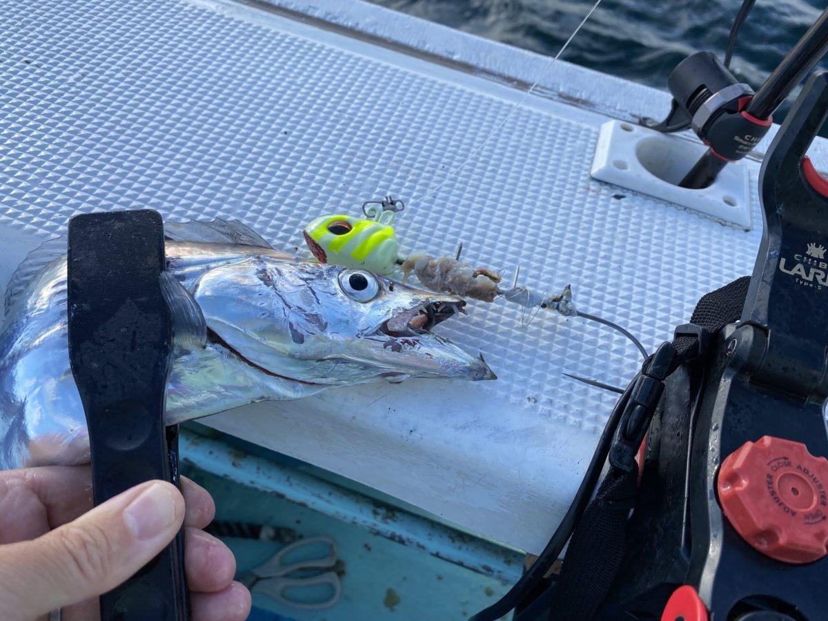 色んな釣りに使えます